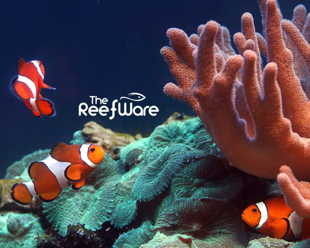 The Reefware